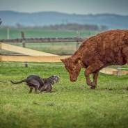 24. Setkání majitelů a chovatelů Lousianských leopardů